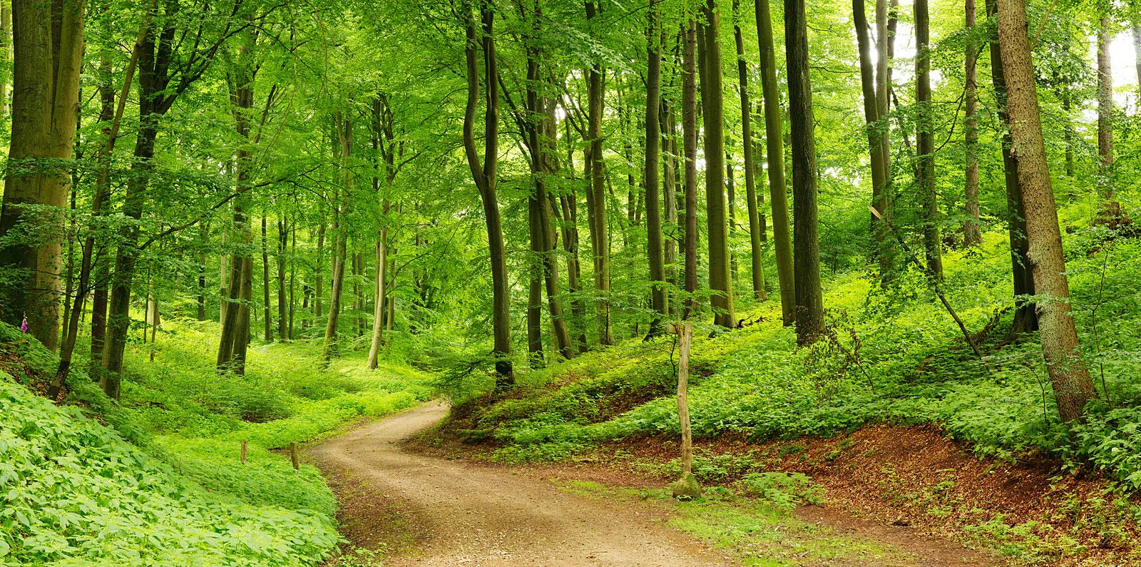Natur im Bayerischen Wald
